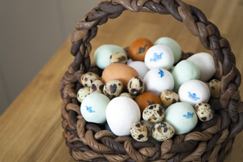Egg basket cake icing