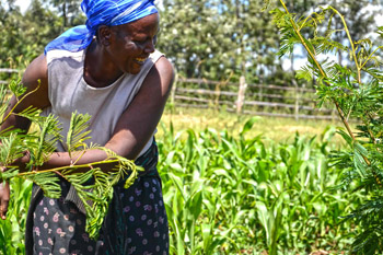 lady farming in Africa