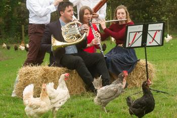 Classic FM Chickens