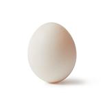 Leghorn Whites Egg